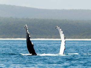 Kiwi tourists bringing in the big bucks for Fraser Coast