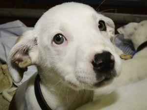 Adopt a pet at Ballina on Saturday