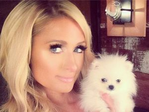 Paris Hilton wants a dog nanny