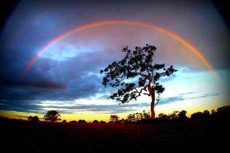 Caniaba rainbow.