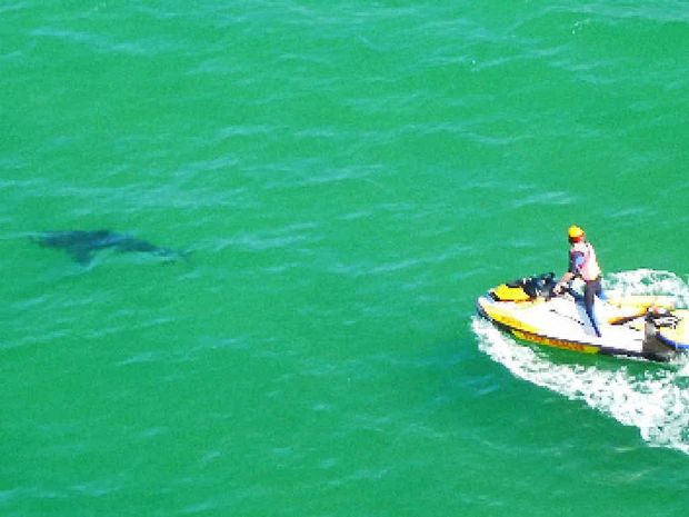 BE AWARE OF RISKS: A 3m shark was located near the Byron Bay Surf Club, close to the shore break, following a fatal attack at Clarkes Beach last week.