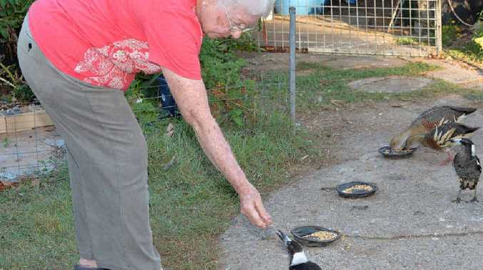 ABOVE: June Weekes hand-feeds a magpie in the backyard of her Andergrove home.