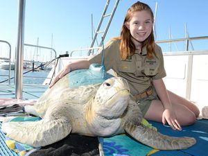 Tracking Gemma the turtle's underwater adventures