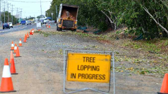 SAFETY IN MIND: Council is cutting down trees along Paradise St as part of a revitalisation program.