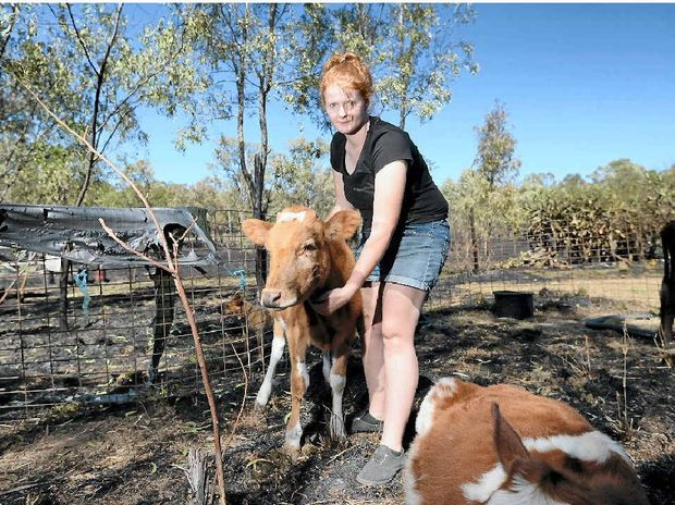 RELIEF: Brooke Moyle is just grateful that her poddy calves are ok after a grassfire burned right to the back steps of her house at the corner of the Burnett Hwy and Leydens Hill Rd, Struck Oil.