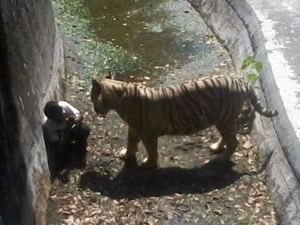Student killed by tiger as zoo staff took 15mins to arrive