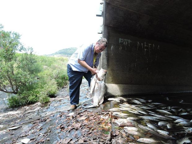 Mackay Recreational Fishing Alliance president Lance Murray with some of the dead fish at Reliance Creek.