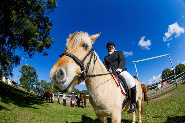 Fans of equestrian sports will be in horse heaven at Nana Glen this weekend.