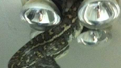 An 'unwanted guest' drops in through an uncovered bathroom light. Photo posted to Facebook page of Snake Catchers Brisbane, Ipswich, Gold Coast & Toowoomba.