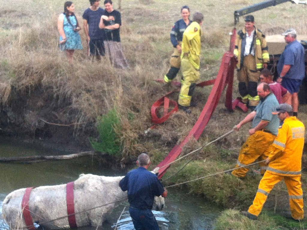 DELICATE OPERATION: The horse is carefully led from Purga Creek.