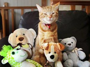 Pet cat Mufasa is main suspect in stuffed toys mystery