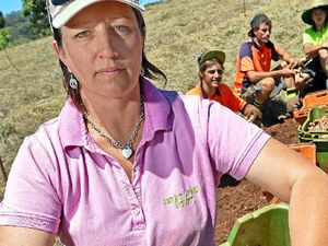Joyce rejects Gympie ginger grower concerns