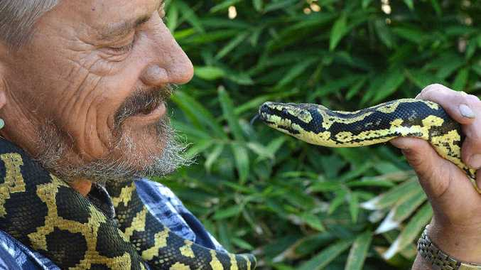 SNAKE SEASON: Experienced snake handler Matt Moon, with a jungle carpet python, says there has been an increase in snake sightings in Mackay.