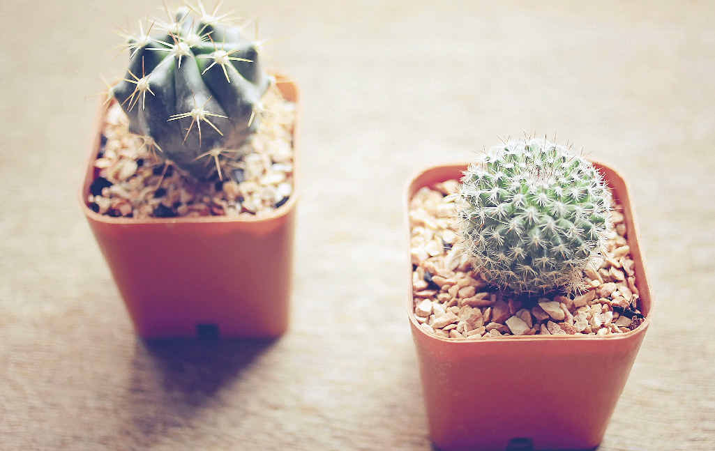Cactus collectors are popping up everywhere as people recognise their aesthetics and low maintenance.