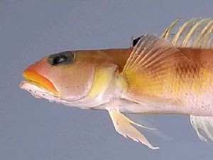 New fish species found off Australian coast