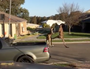Kangaroos fight on suburban streets