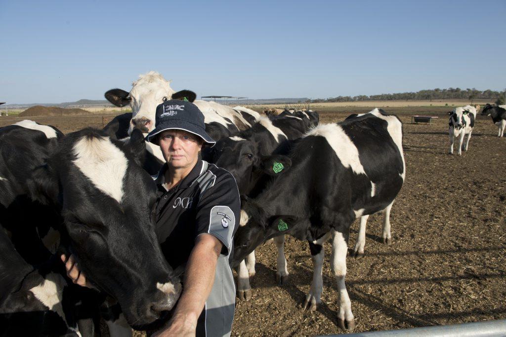 Natalie Crank badly needs rain at the family holstein dairy farm,