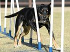 Dogs try out twists, turns at annual agility trials