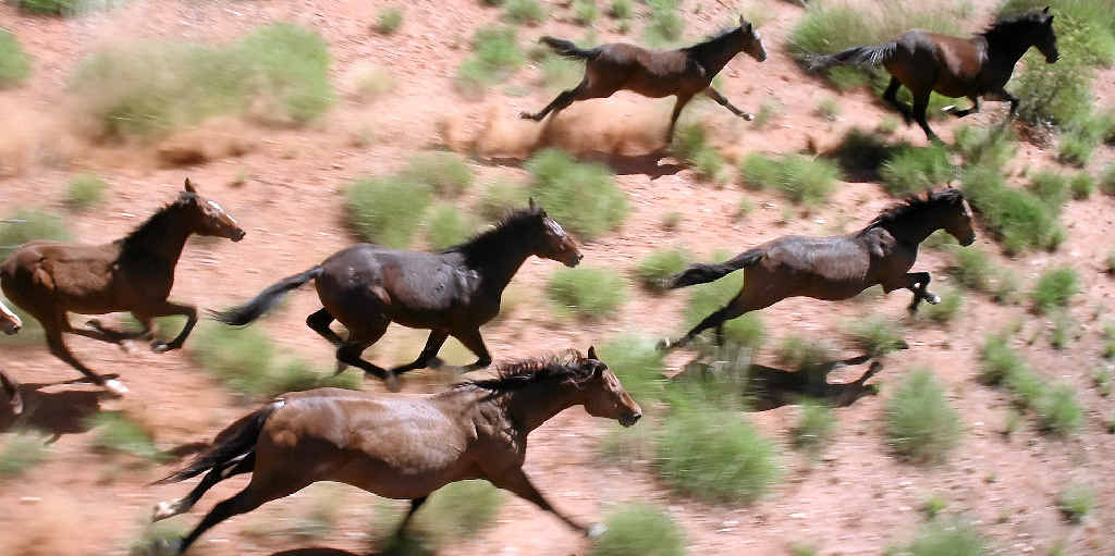 The upside of a day in the chopper was the chance to take photos of brumbies.