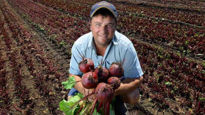 REAPING REWARDS: Troy Qualischefski from Qualipac with his first season of beetroots at his Glenore Grove farm.