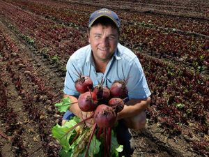Farmer's gamble with beetroot pays dividend with big contract