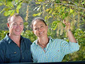 Nut farmers insist on quality