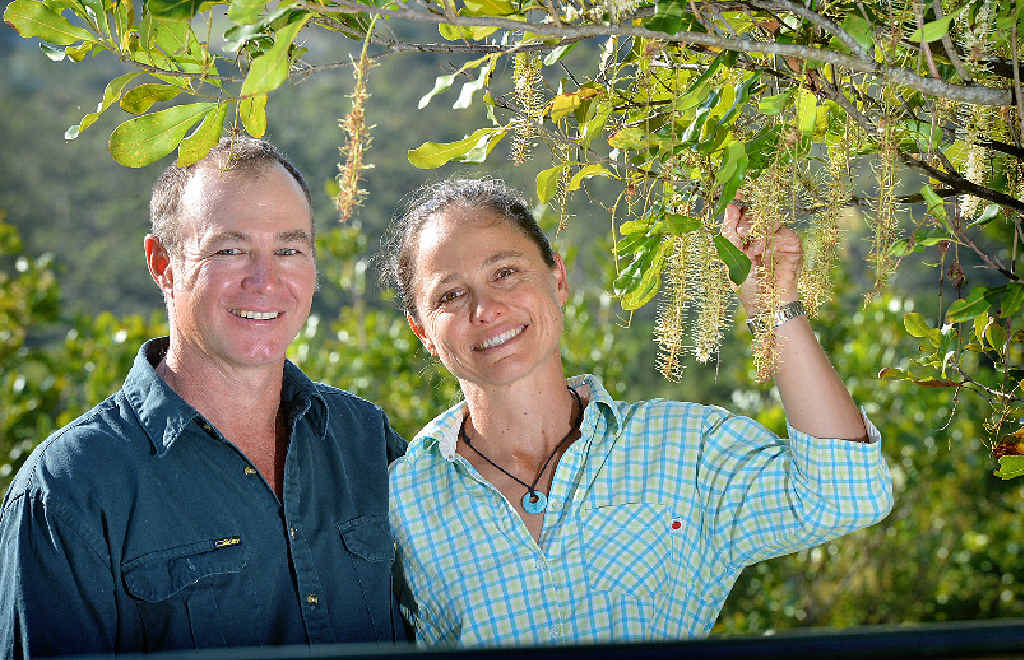GETTING RESULTS: Mathew and Nicola Fea, macadamia farmers at Mothar Mountain.