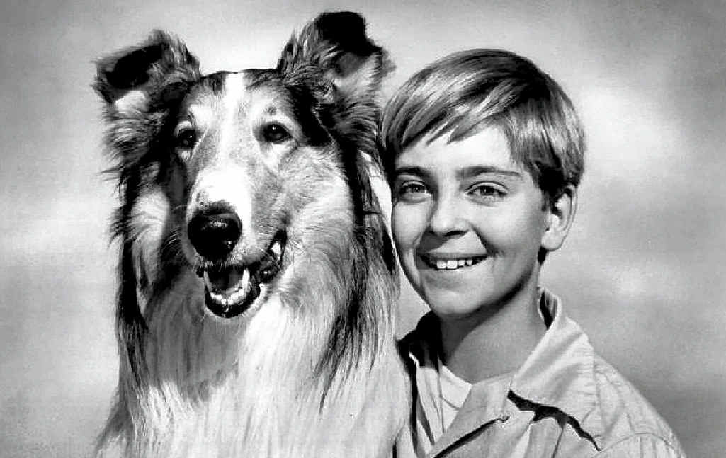 A 1955 publicity shot of Lassie with child actor Tommy Rettig, who starred in the Lassie TV show.