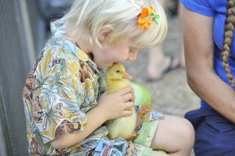 Tanami Batty, 3, of Lismore, kisses a duck on the head at the petting zoo held in the Lismore CBD as part of the North Coast National.