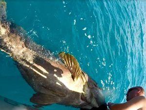WATCH: Fishermen grapple to free grouper, bull shark