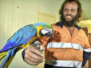 Iconic macaw is back home safe and sound