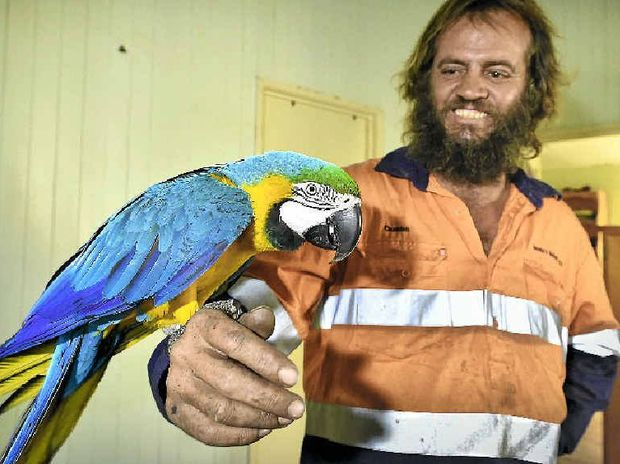 HOME AGAIN: Duane Venema is happy to have his prized macaw Vicden back at home with him.