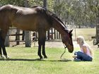 Toowoomba jockey Melody O'Brien with her retired thoroughbred gelding Professor. She knows just how dangerous her job can be.