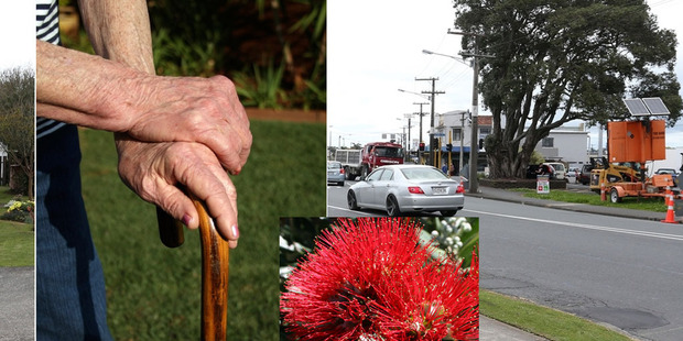 Margaret Skinner will lose part of her property because a protected pohutukawa (right) can't be removed by the council.