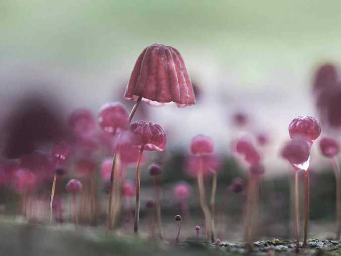 EYE FOR DETAIL: Camira amateur photographer Glenys Passier's Fairy Lamps won her the top prize.