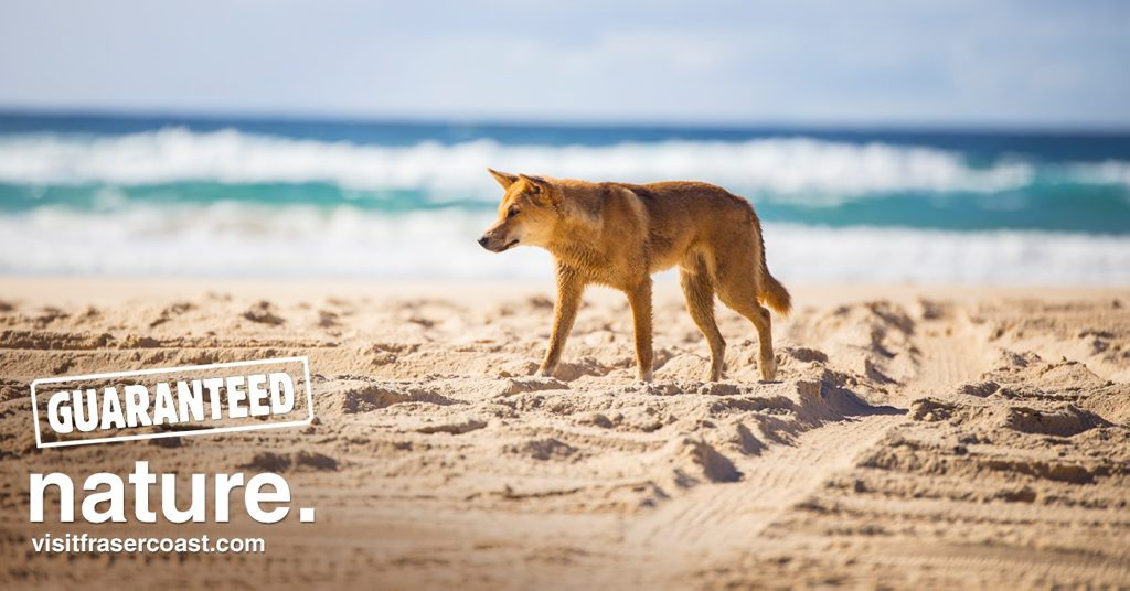 Australians are being encouraged to visit the Fraser Coast in a new tourism campaign.