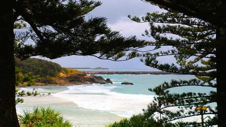 Diane Lymbury - Whenever I think of Yamba, I think of its beautiful pines, so today's submission is framed by them and is titled