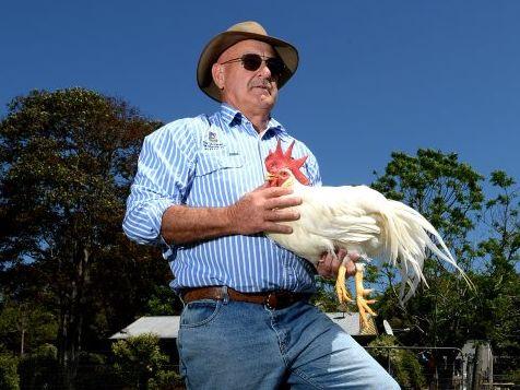 Graeme Hopf is a cattle and livestock judge. Photo: John Gass / Tweed Daily News