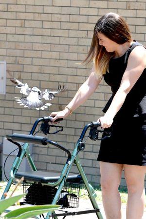 Journalist Anna Hartley proves that the butcher bird is targetting Mrs Allen's walker. Photo: Kate Czerny / The Queensland Times