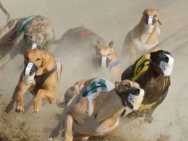ARE THEY OFF? Readers challenge MP Steve Dickson's defence of greyhound racing.