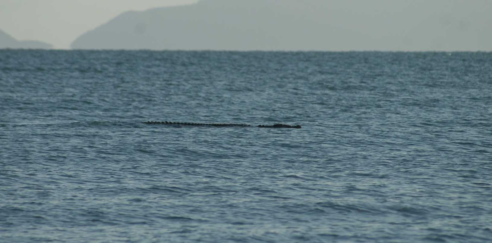 The crocodile spotted from Blacks Beach.