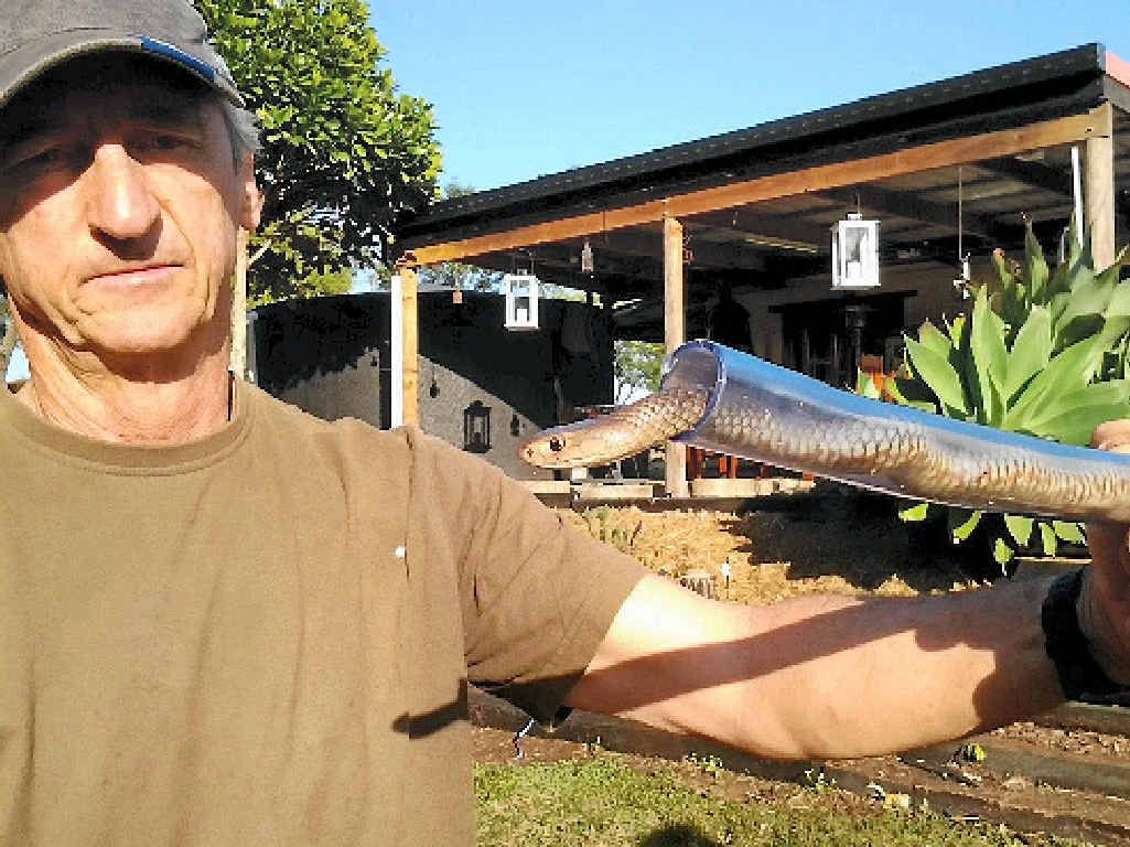 SAFE HANDS: Gladstone snake catcher Mike Boen with an eastern brown caught in Calliope.