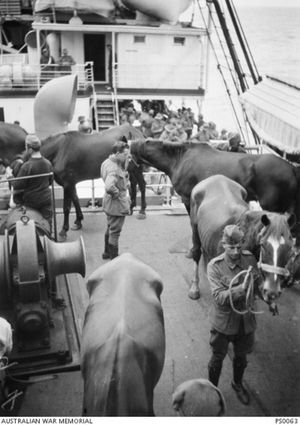 It was the duty of soldiers to exercise horses on deck and regularly clean out their stalls. Courtesy of Australian War Memorial PS0063