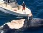 Man 'rides' dead whale surrounded by sharks