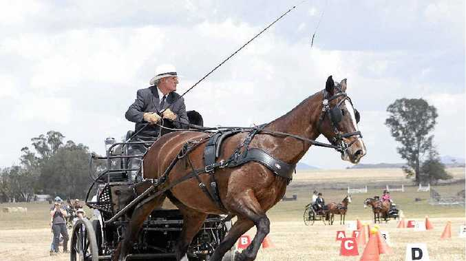 TOPS: Local driver and carriage driving coach Bill Wicks, of Broadwater, in competition mode with mare Sazz.