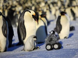 Robotic baby penguin helps researchers learn secrets
