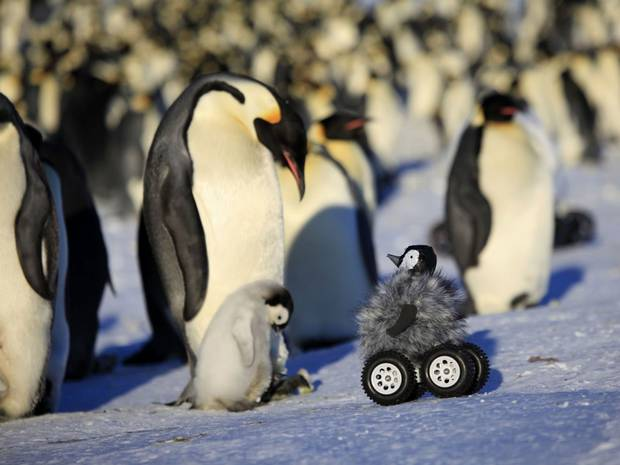 A remote-controlled roving camera camouflaged as a penguin chick in Adelie Land, Antarctica.