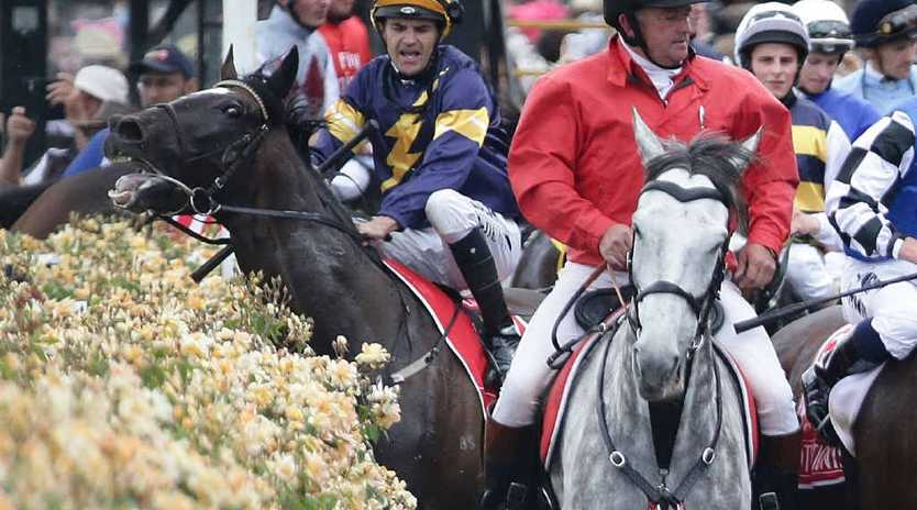 RACE HORROR: Jockey Dwayne Dunn tries to rein in Araldo after he was spooked by a spectator following the Melbourne Cup. Photo: AAP