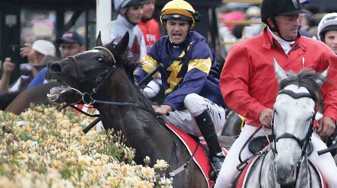 HORRIFIC: Spooked Araldo (left) ridden by Dwayne Dunn is tangled in a fence after the Cup.
