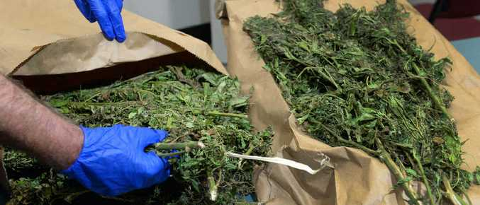Police recovered a large quantity of cannabis from a car near McLean and Bourbong Sts.